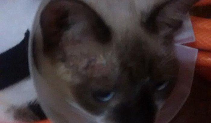 Ajuda para duas gatinhas resgatadas com problemas de pele