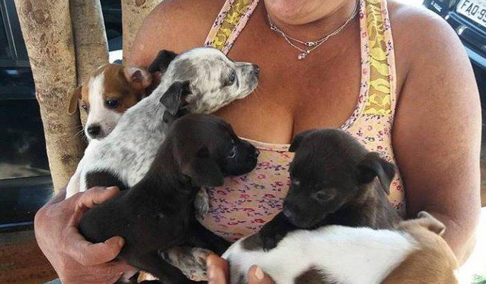 mutirão de castração de 10 gatas e 10 cachorras de Nov