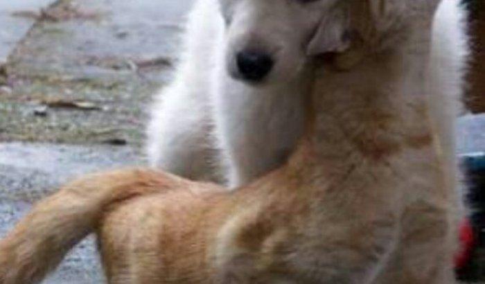 Instituição pra ajudar os animais