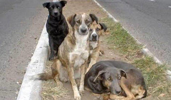 Comprar ração para cachorrinhos de rua