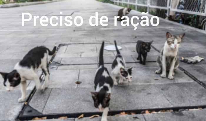 10 gatos