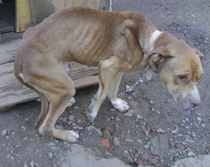 Por favor ajuda para pagar o tratamento do meu cachorro