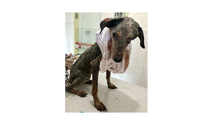 Resgate Cachorrinha em Aracaju