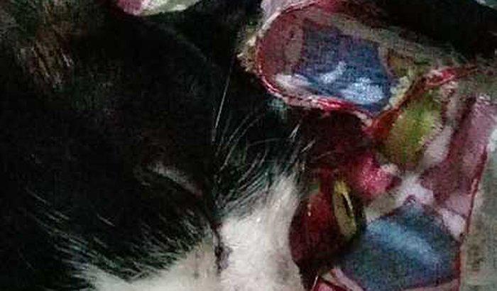Ajuda para um gatinho que foi atropelado