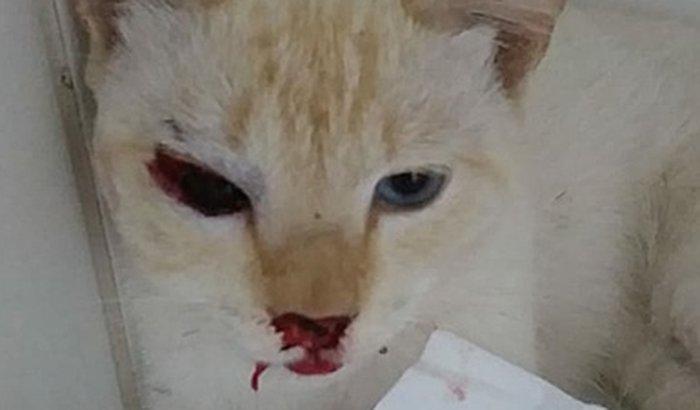 Ajude o gato atropelado