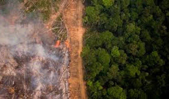 Juntos contra o desmatamento