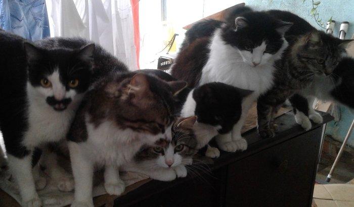 Tia dos gatos.