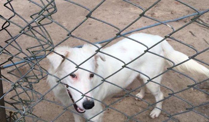 Ajuda para os animais resgatados da rua