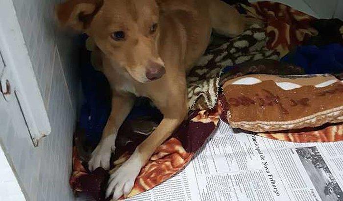 Ajuda à Amélia a cadelinha atropelada