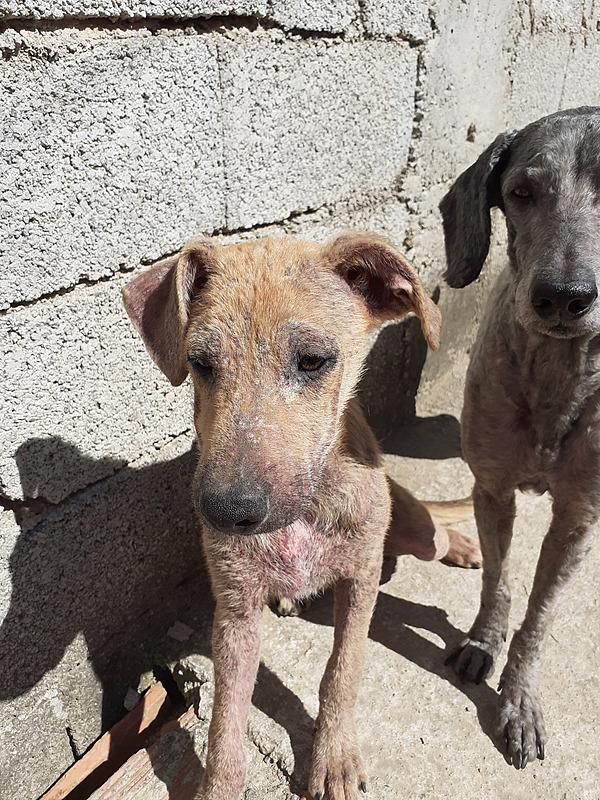Ração e remédios para cães e construção de canil