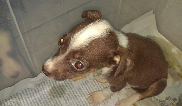 Ajuda para custear tratamento de um cãozinho