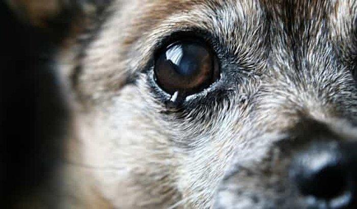 Ajudem os cães  a ter uma vida boa
