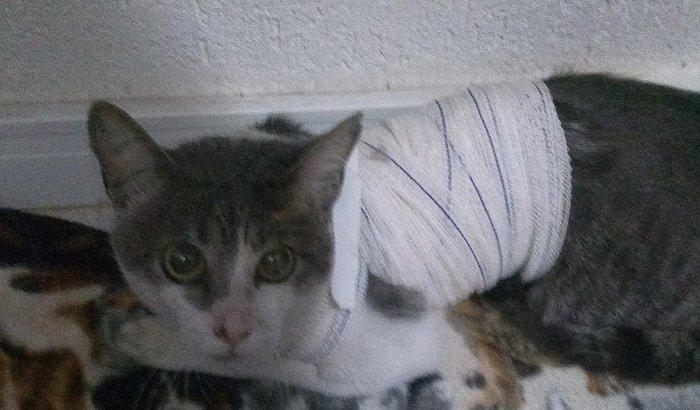 Ajude a salvar a vida de um gatinho