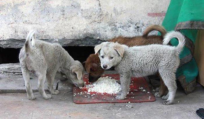 Cachorros na rua no frio