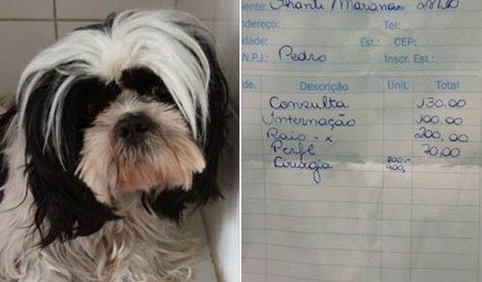 Ajude a salvar a cadelinha Shanti