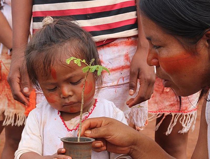 Campanha Emergencial Guarani Kaiowá