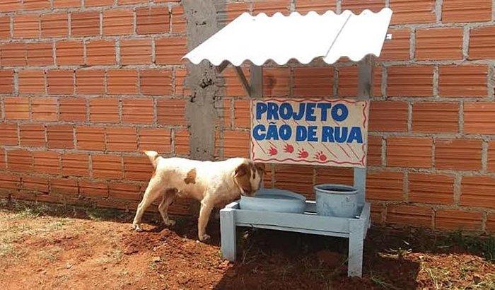 Projeto instala comedouros e bebedouros a cães de rua
