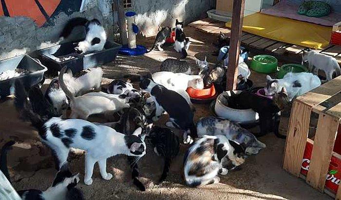 Ajuda para custear projeto que abriga gatos de rua