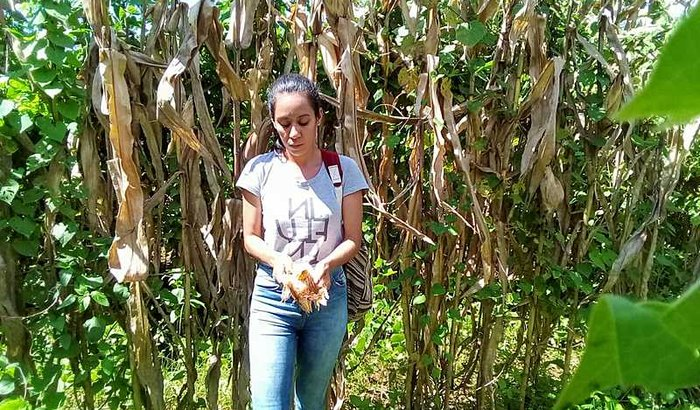 Ajude a Nina na sua pesquisa no México
