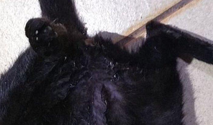 Minha gata tah com filhotes mortos dentro dela