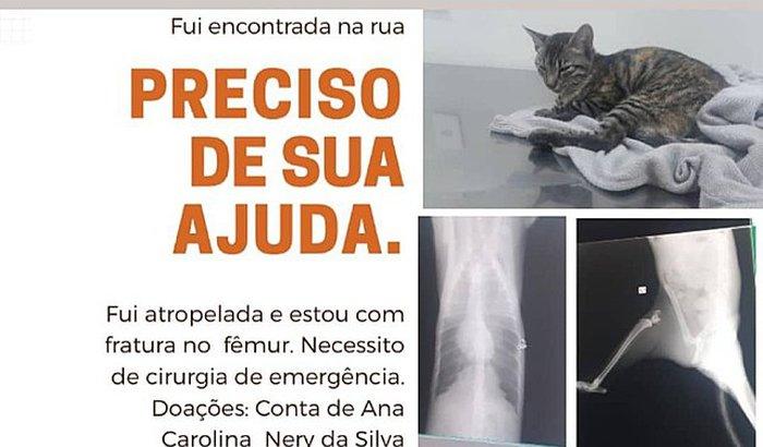 Cirurgia da gatinha Gamilda