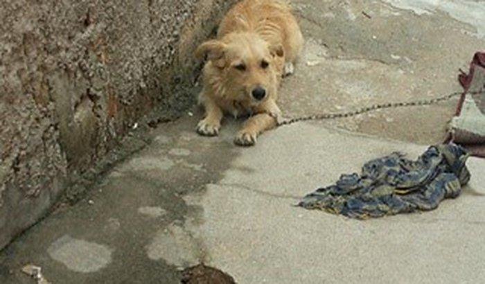 """Preciso de Ajudar o Torresmo,um cãozinho ...."""""""