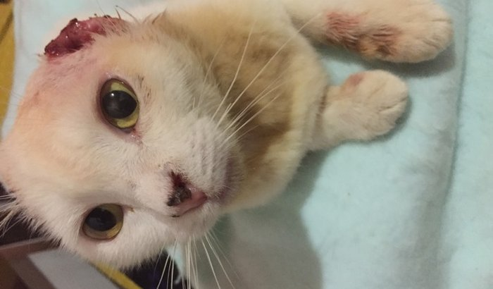 Ajuda para o tratamento do gato Mimo