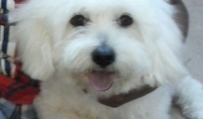 Meu cachorro