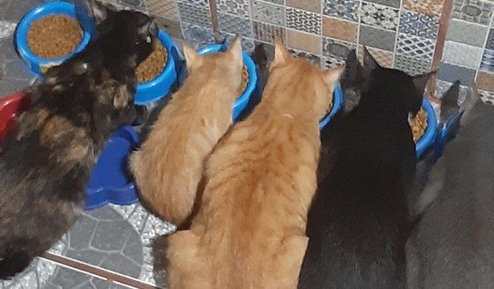 Ajuda para comprar ração, granulado e vacinas para 69 gatos