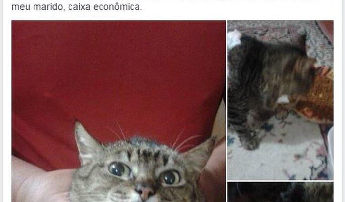 Cirurgia da gatinha Belezinha