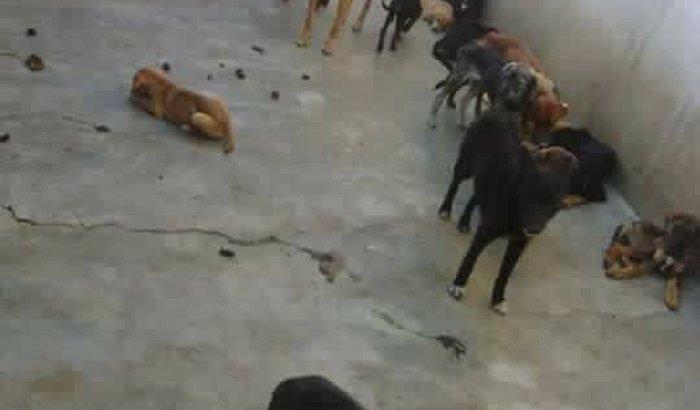 Ajuda para os Cães de Ipuiuna