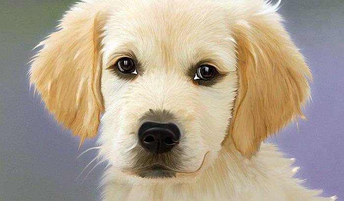 Manter 22 Cachorros Resgatados Urgente Eles precisam de Sua Ajud