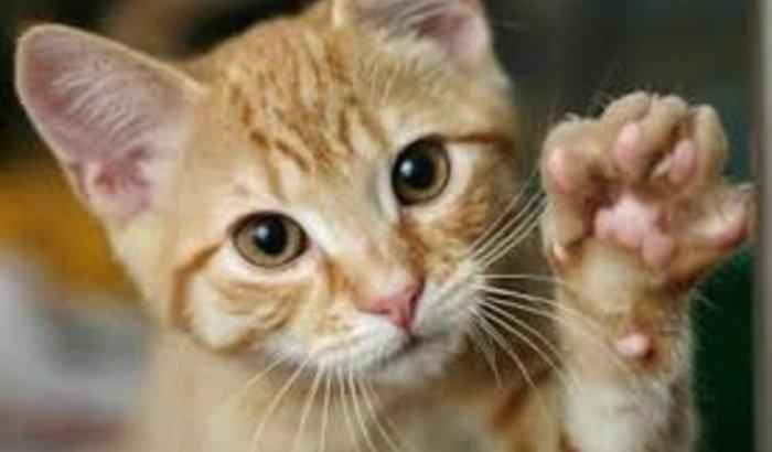 Castração dos gatos do bondoso catador
